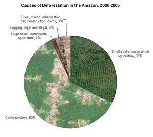 Deforestation-in-the-amazon