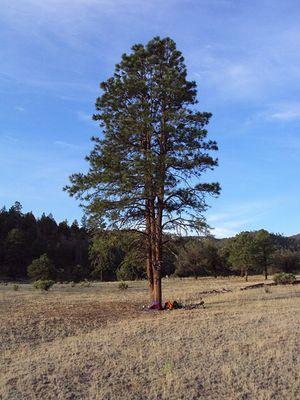 My tree campsite
