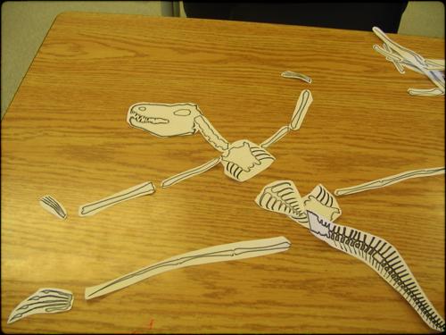 Re-arrangeing bones