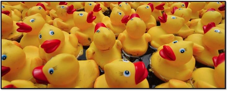 Olliebray rubber ducks circumnavigate the globe teaching ocean rubber ducks fandeluxe Image collections