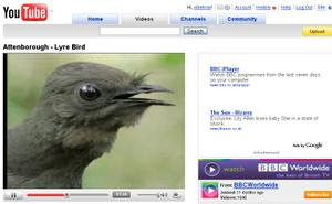 Lyre_bird_you_tube